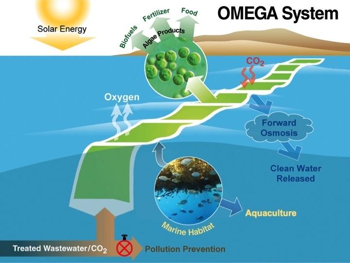 energy from floating algae pods solar system exploration. Black Bedroom Furniture Sets. Home Design Ideas