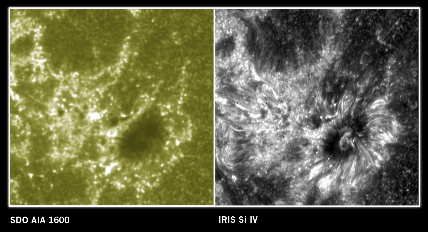 sdo_iris_labels